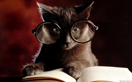 Удивительные факты о кошках, которых ты не знал