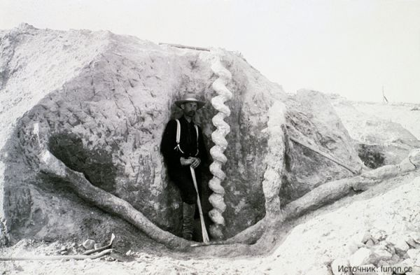 Доисторический бобр и винтовые камни