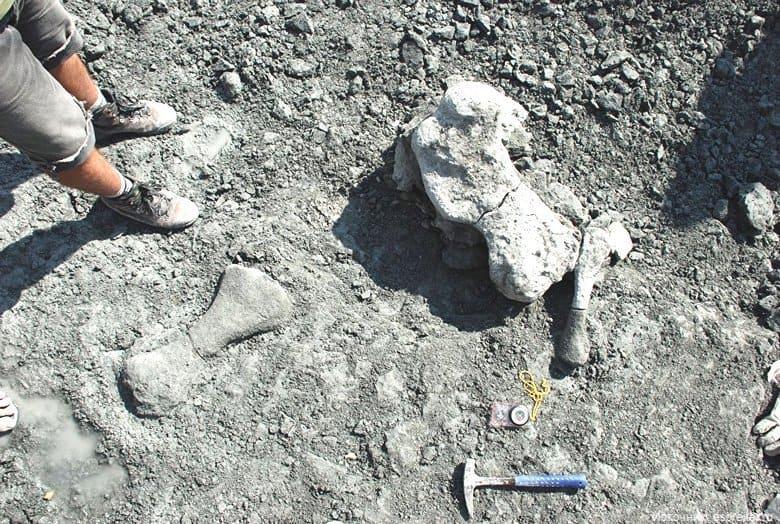 Люди произошли от динозавров