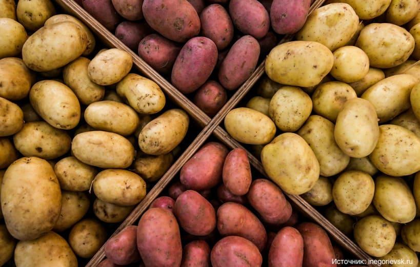 Как российские императоры прививали населению любовь к картофелю?