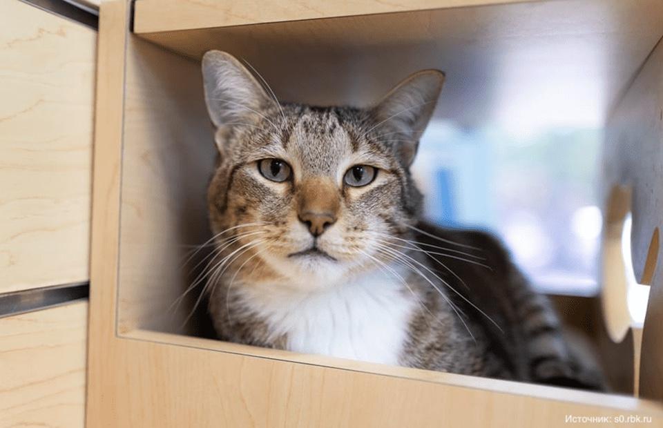 Интернет-сообщество потребовало освободить кота из карцера