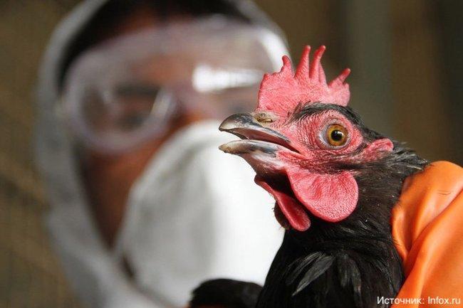 России угрожает птичий грипп из Европы