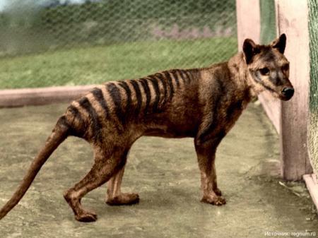 10 животных, которых истребил человек
