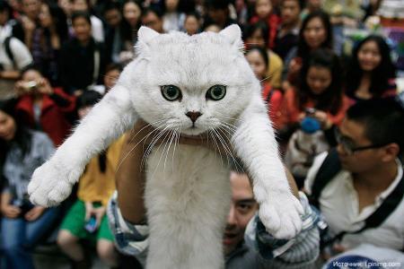 Китайцы начали массово выбрасывать кошек и собак из окон высотных зданий (18+)