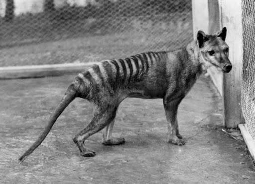 10 животных, которые вымерли благодаря нам за последние 150 лет
