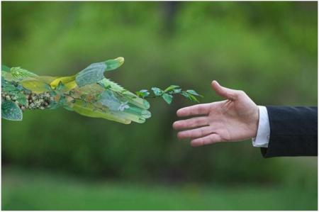Домашние растения, приносящие деньги