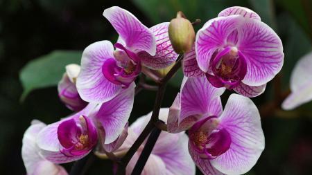 Почему в доме нельзя держать орхидею: о чем не знают хозяйки